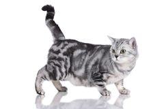 Cat sideways isolated Royalty Free Stock Photo