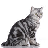 Cat sideways isolated Stock Images