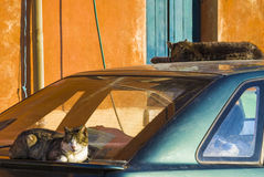 Mediterranean cat siesta. Two cats sleeping on old car in Southern France, atmoshere of relaxation Royalty Free Stock Photo