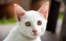 Cat sight Royalty Free Stock Photo