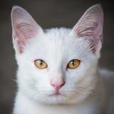 Cat sight Stock Image