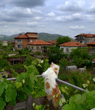 Cat sightseeing. On terrace fence.Picture taken on May 6th,2014, Krichim town,Bulgaria Royalty Free Stock Image