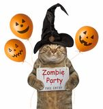 Cat in a witch hat with halloween balloons stock image
