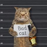 Cat with sign and rum in prison