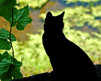 Cat Silhouette. A black cat hunts from the bank of a stream Stock Images