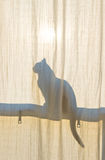 Cat Silhouette Royalty Free Stock Photography