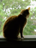 Cat Silhouette. An orange cat in silhouette against a bright window Royalty Free Stock Photo