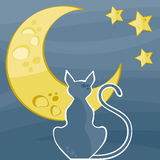 Cat silhouette. By a beautiful starry night Stock Photography