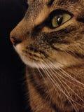 Cat Silhouette royaltyfria foton