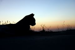 Cat Silhouette. With a sunset in the background Royalty Free Stock Photography