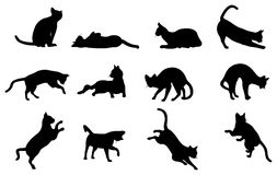 Cat silhouette. Cat, black silhouette on white Stock Photography
