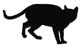 Cat Silhouette Immagini Stock