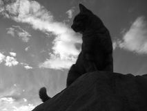 Cat Silhouette B/W. Cat silhouette (B/W) sitting atop a boulder against a blue cloud filled sky. This angle is from below, looking up and is dramatic Stock Image