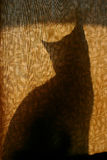 Cat Silhouette Curtain. House cat silhouetted against a brown floral curtain Stock Photo