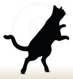 cat silhouette Stock Photos