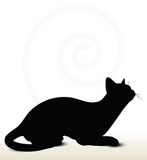 cat silhouette Stock Photo