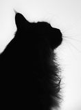 Cat silhouette. Silhouette of cat looking out of window Stock Photos