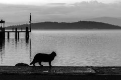 A cat silhouette near a lake at dusk. A cat silhouette on a pier on a lake at dusk stock photography