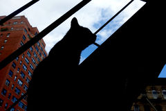 Cat Silhouette. The silhouette of a cat on a New York fire escape Stock Photography