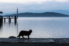 A cat silhouette on a pier. On a lake at dusk stock images