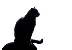 Cat silhouette. Sitting on white Stock Photo
