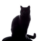 Cat silhouette. Sitting on white Royalty Free Stock Photography