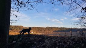 Cat Silhouette and the South Bohemian Landscape. A travel cat watching the beautiful scenery of South Bohemia, Czech Republic in the winter afternoon Royalty Free Stock Photography
