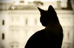 Cat  silhouette Royalty Free Stock Image