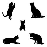 Cat Silhouettes - 2 Stock Photo