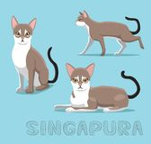 Cat Singapura Cartoon Vector Illustration. Animal Character EPS10 File Format Stock Image