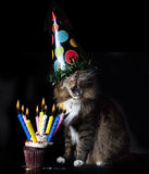 Cat Singing Happy Birthday Fotografia de Stock