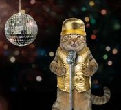 Cat singing a song at the stage royalty free stock photos
