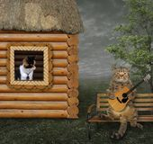 Cat with guitar under window. The cat sings a romantic song for his beloved under the window royalty free stock images