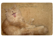 Cat sings a song. Old postcard Royalty Free Stock Photography