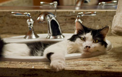 Cat In The Sink Stock Images
