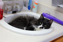 Cat in Sink Royalty Free Stock Photos
