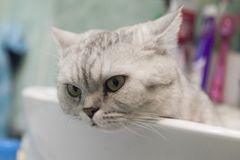 Cat in a sink Stock Images