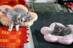 Cat sisters Stock Photos