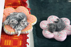 Cat sisters Stock Images