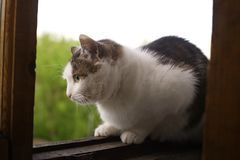 Cat sit on the balkony window close up photo