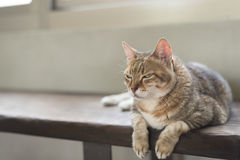 Cat sit on the bench Stock Image