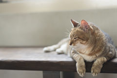 Cat sit on the bench Stock Images