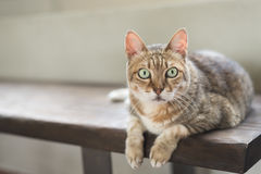 Cat sit on the bench Royalty Free Stock Photography