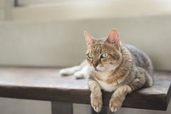 Cat sit on the bench Stock Photography