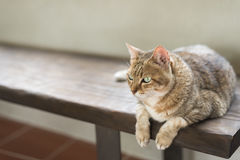 Cat sit on the bench Stock Photos