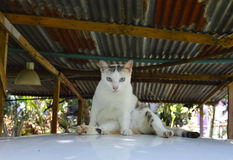 Cat sit on car roof in garage Royalty Free Stock Photos