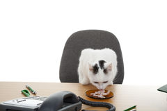 Cat sit at the desk Royalty Free Stock Images