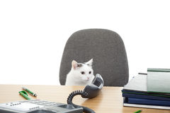 Cat sit at the desk Stock Images