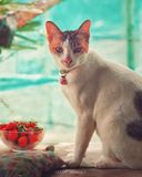 Cat on table. Cat sit down on table stock images