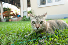 Cat sit on field. Cat sit on grass field and looking for something Royalty Free Stock Images